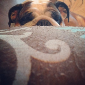 bulldog sleeps