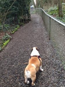 Pinehurst dog park